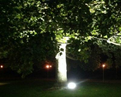 garden uplighter